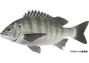 日本の釣り大百科のイメージ