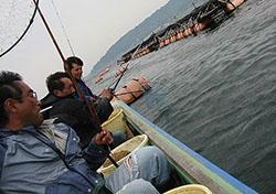 勝山カカリ釣り クロダイヒット