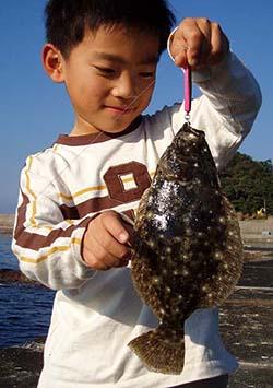 ヒラメ釣果