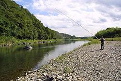 久慈川でアユ釣り