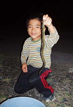 ウナギ釣果