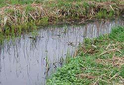 手賀沼水系のホソ