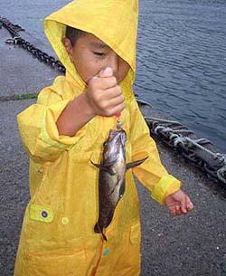 羅臼の堤防でメバル釣り