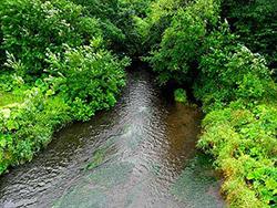 道東の原野の川